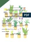 PROYECTO PLANTAS MEDICINALES
