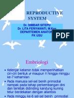 (K3) Male Reprod SystKBK