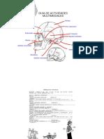 Anatomia, Laminario