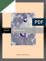 MGII_Practica_4_Hemoparasitos.pdf