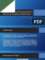 Antracnosis en Fréjol