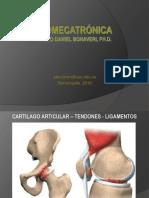05 Cartilago Articular Tendones y Ligamentos