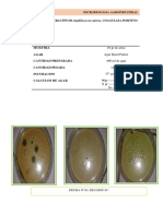 Practica 06 Numeracion de Staphilococcus Aureus Coagulasa Positivo