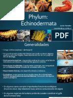 C15_Echinodermos
