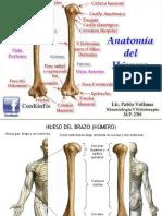 ASE- Anatomia del Humero.pptx
