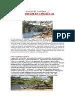 Bosque El Cañoncillo