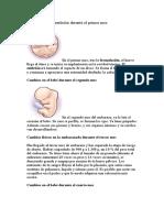 fecundacion.biologia.doc