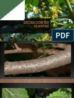 Excreción en Plantas 2 Parte
