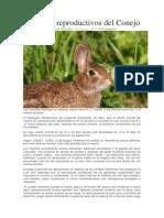 Aspectos Reproductivos Del Conejo