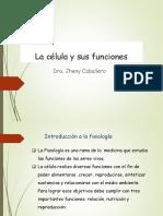 La Celula y Sus Funciones