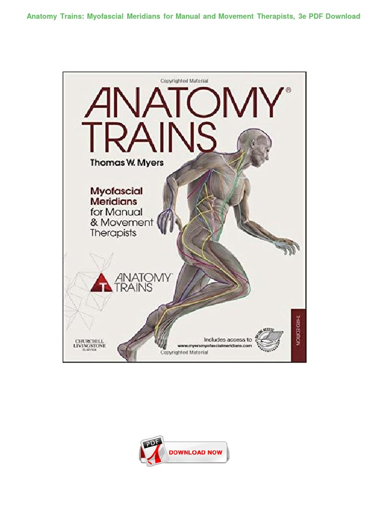 Anatomy Trains Myofascial Meridians Image Collections Human Body