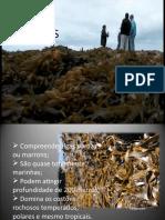 Algas Feófitas (Algas Pardas)