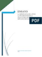 la importancia del ATP en el estudio de los impulsos Nerviosos