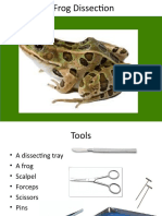 frog_ppt