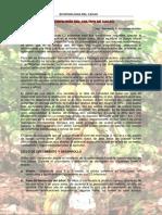 Ecofisiologia Del Cacao Public