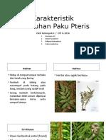 Karakteristik Tumbuhan Paku Pterisss