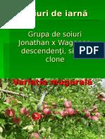 Mere - Soiuri de Iarna - Jonathan x Wagener