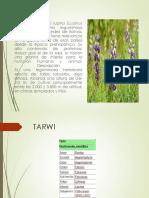 El tarwi
