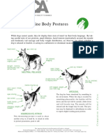 Canine Body Language ASPCA