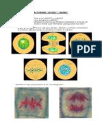 ACTIVIDADES biologia reproduccion celular
