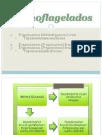 10.Hemoflagelados
