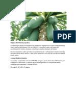 Cultivo de Papaya.docx