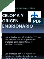 Celoma y Origen Embrionario