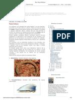Bios_ Phylum Mollusca