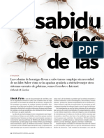 La Sabiduria Colectiva de Las Hormigas