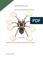Organizador Grafico de Araña