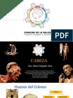 Cabeza y Neuro 1.PDF