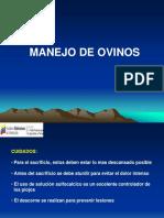 MANEJO DE OVINOS.ppt