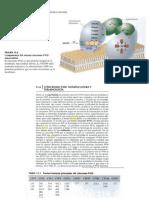 Citocromo p450 - Familias