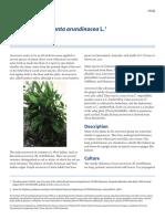 Arrowroot—Maranta Arundinacea L.1