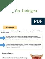 laringe ppt