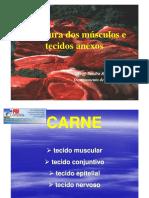 Aula 3- Estrutura Muscular (2)