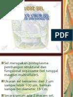 Struktur Umum Sel