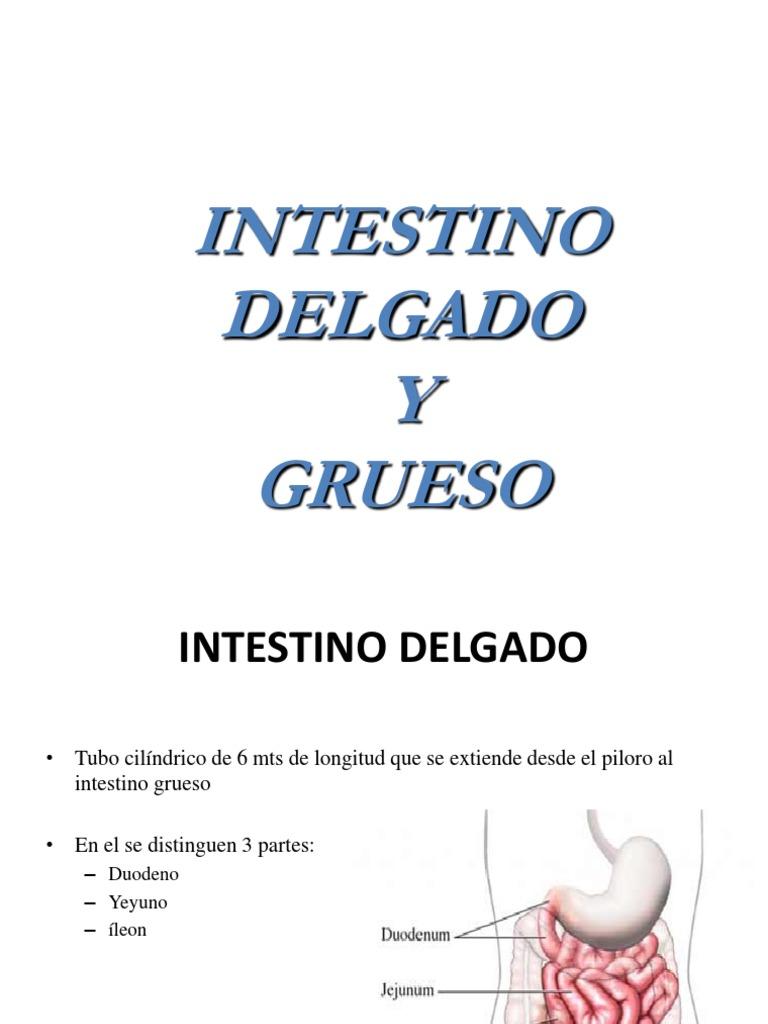 Anatomia y Fisiologia Del Intestino (1)