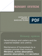 23022016 - Histology of Urinary System