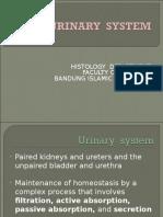 23022016 - Histology of Urinary System