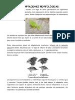 Adaptacion Morfologica Fisiologica y Conductual