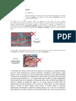 MORTERO 4.docx