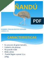 El Ñandú Poly
