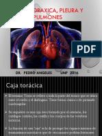 1. Pared Toracia, Pleura y Pulmones_2016