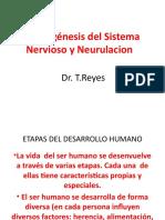 2_Embriogénesis Del Sistema Nervioso y Neurulacion2
