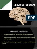 Sistema Nervioso Central II