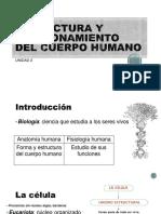 Estructura y Funcionamiento Del Cuerpo Humano