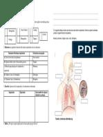 guía del sistema resp.docx