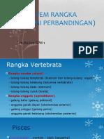 Sistem Rangka (Anatomi Perbandingan).pptx