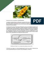 Variaciones de luz en las plantas.pdf